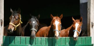 Horses standing in the sun