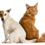 how to treat arthritis in pets