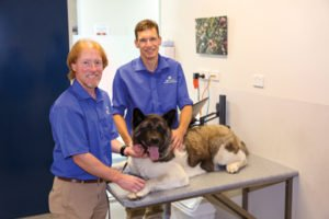 selling your veterinary practice