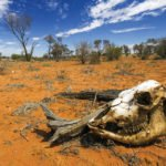 toll of drought on vets