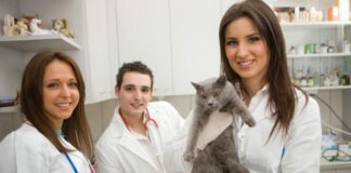 australian veterinary profession