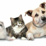 parasitic diseases in pets