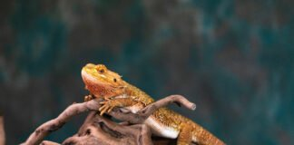 caring for exotic pets