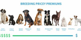 pet insurance dog breeds