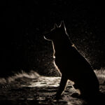 canine night blindness