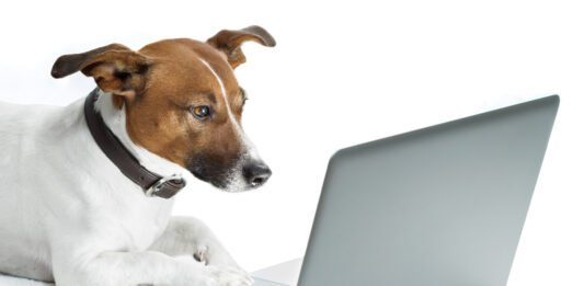 veterinary telehealth